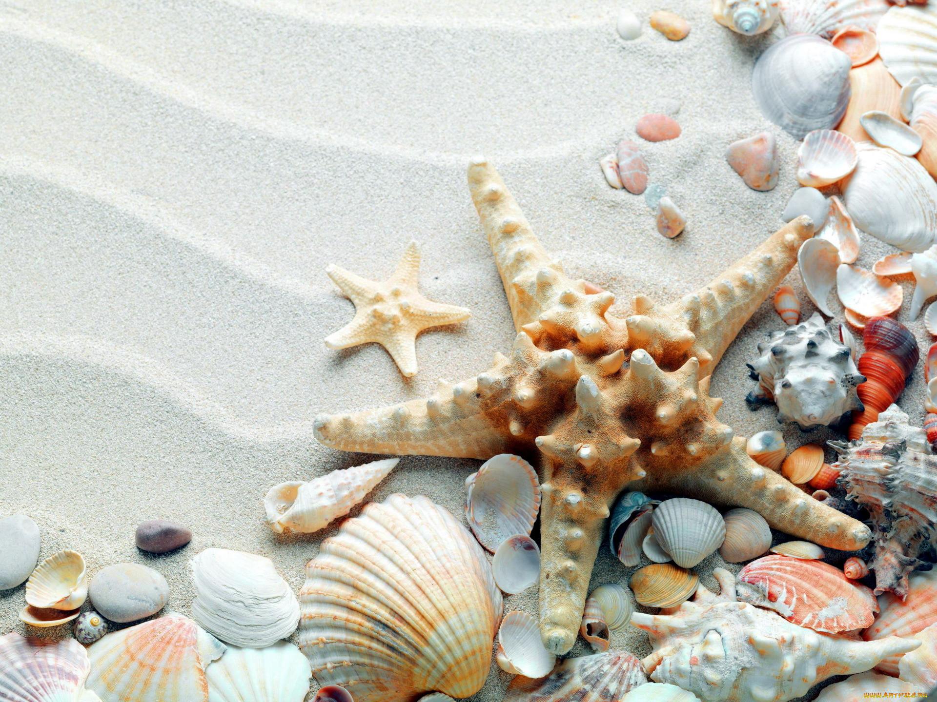 Обои ракушка, морская звезда. Разное foto 6